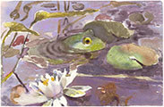 06-Frog-7x10-Diana-Guy