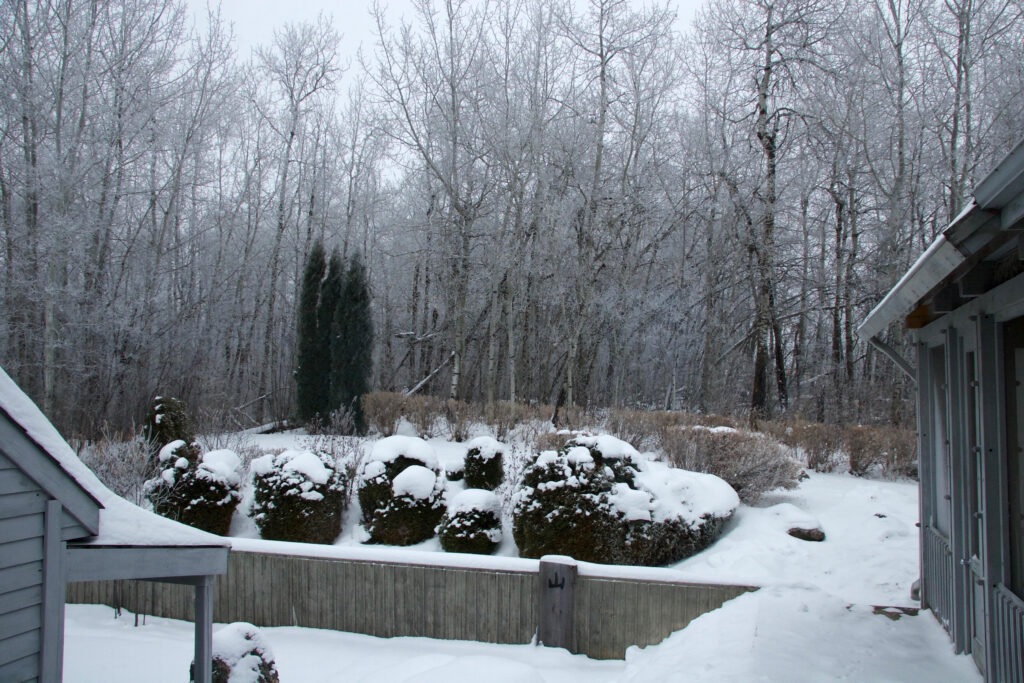 Winter garden and forest