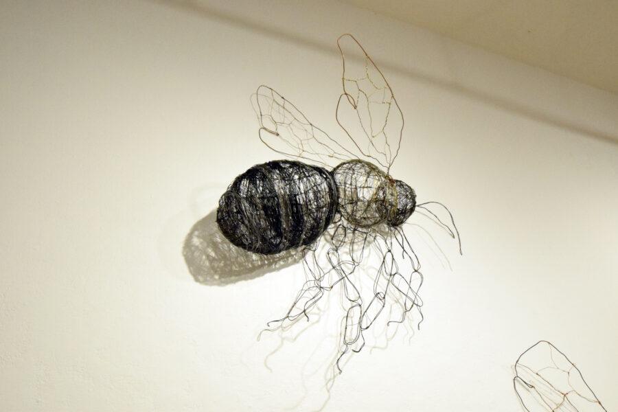 Plasterer Bee