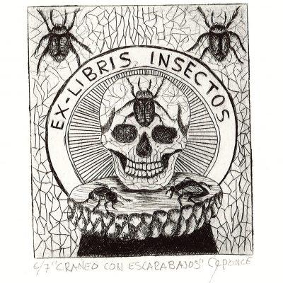 Craneo Com Escarabajos 6/7